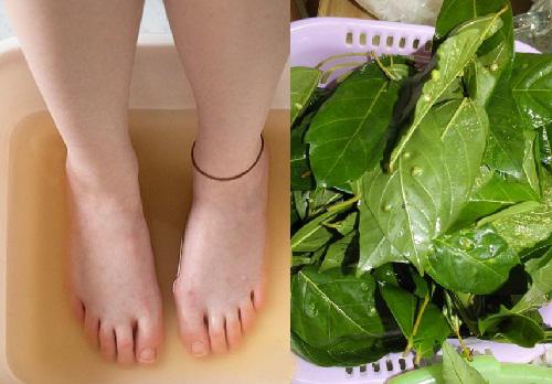 Lá sung trị bệnh gì? Những công dụng của lá sung đối với sức khỏe ảnh 6