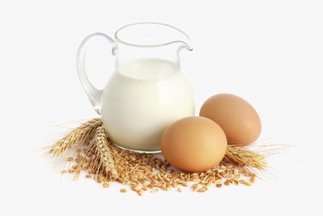 Trứng và sữa là thực phẩm cần thiết cho sức khỏe người bị gan nhiễm mỡ