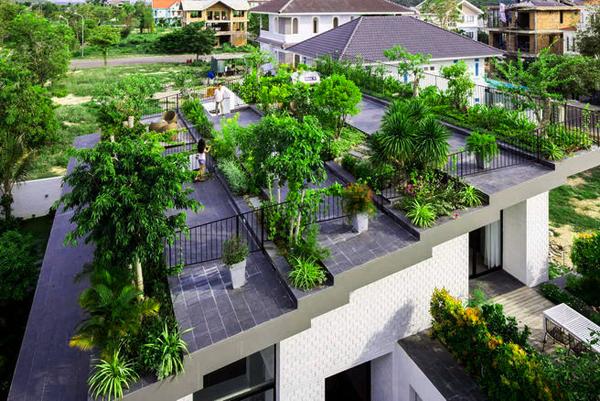 Mái nhà phải kiên cố, vững chắc mới trồng được cây trên mái nhà