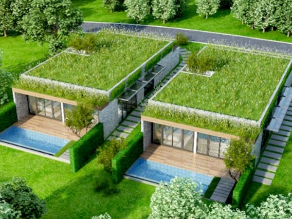Trồng cây trên mái nhà tạo ra môi trường sống xanh cho con người
