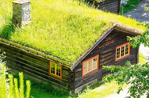 Trồng cây trên mái nhà chống nóng là xu hướng kiến trúc mới