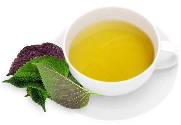 Uống nước lá tía tô là bài thuốc chữa viêm họng từ dân gian rất hiệu quả