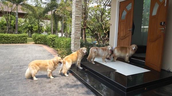 Chó vào nhà ngày 1 tết là điềm báo may mắn