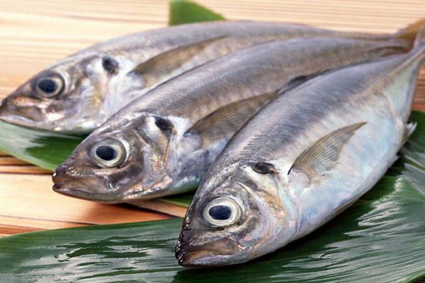 Nguồn dĩnh dưỡng trong cá biển rất tốt cho sức khỏe hệ tim mạch, ngăn ngừa ung thư