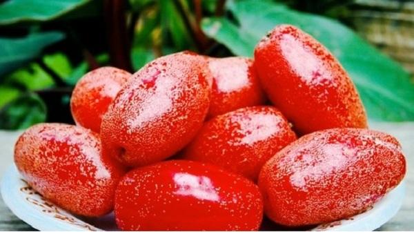 Hạt quả nhót còn tươi có chứa độc tố
