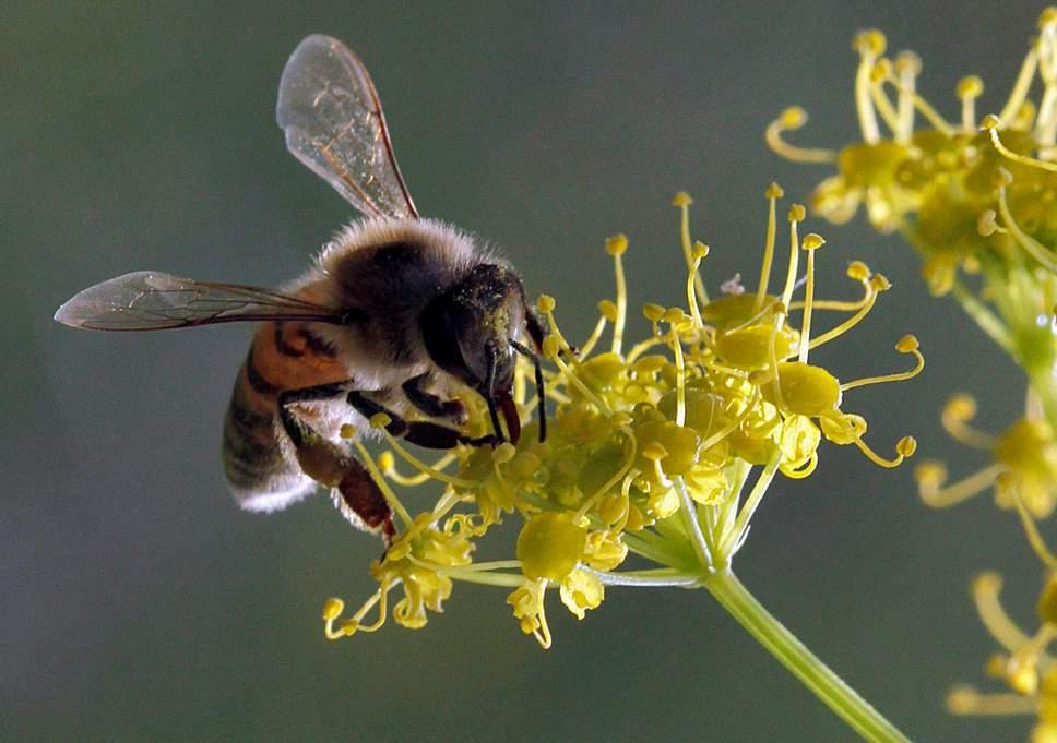 Cảnh báo các phụ huynh không cho trẻ sơ sinh sử dụng mật ong - Ảnh 3