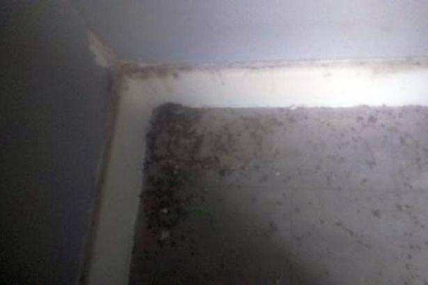 Hàng trăm con chuột khổng lồ xuất hiện trong nhà, khiến cả gia đình phải di chuyển nơi ở - Ảnh 1