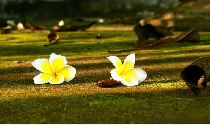 Ý nghĩa cuộc sống không nằm ở độ dài mà ở độ dày, đừng để lúc chết đi mới hối hận 5 điều sau - Ảnh 3