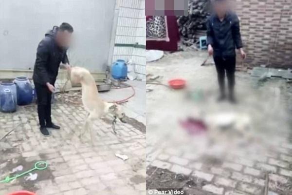 Đoạn clip người đàn ông giết chó thu hút hơn hai triệu lượt xem chỉ sau vài giờ đăng tải - Ảnh 1