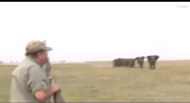 Thấy đồng loại bị bắn chết, đàn voi nổi điên truy đuổi hai thợ săn
