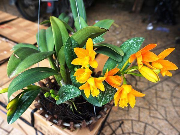 Hoa phong lan hấp thụ khí CO2 vào ban đêm và cung cấp oxy cho không gian sống thoáng mát. Đó là lý do nhiều người đặt hoa lan vào không gian nghỉ ngơi để nâng niu giấc ngủ. Ảnh minh hoạ: Internet