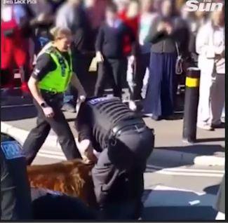 Cuối cùng cảnh sát cũng giải cứu được nam thanh niên ra khỏi con chó hung dữ