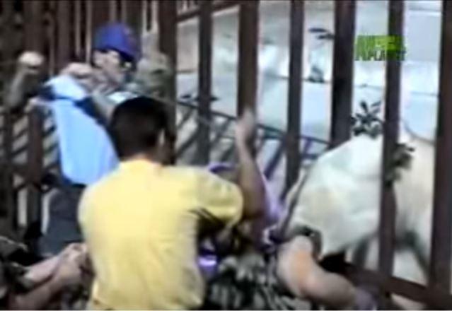 Thót tim cảnh nữ du khách bị gấu Bắc Cực tấn công trong sở thú - Ảnh 2