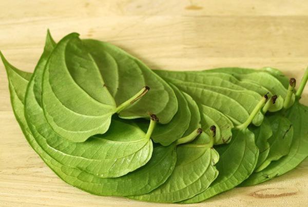 Cách trị hôi nách bằng lá trầu không được sử dụng trong dân gian phổ biến. Chưa nói đến thành phần trong lá trầu không, chỉ riêng mùi hương của nó thôi cũng đủ để đánh bay mùi hôi nách rồi nhỉ!