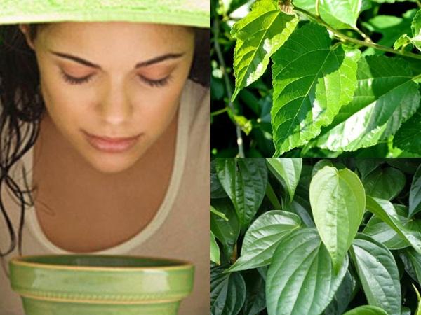 Xông hơi từ nước của lá trầu không và lá dâu sẽ giúp trị đau mắt đỏ, chắp, lẹo hiệu quả