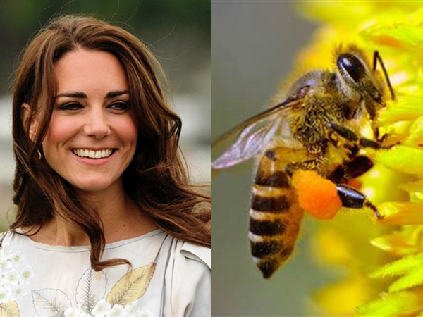 Dùng nọc ong để làm mặt nạ cũng chính là bí quyết giữ gìn nét đẹp của công nương Anh Kate Middleton