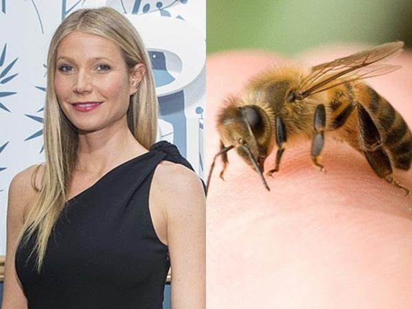 Nữ diễn viên Gwyneth Paltrow đã cho ong đốt để có một làn da đẹp hơn