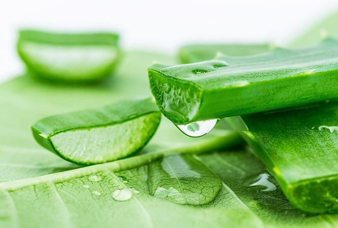 Thành phần của gel lô hội chứa rất nhiều chất kháng viêm có khả năng tạo độ thấm ướt để da sớm đàn hồi và đẩy lùi những vùng lõm, nếp nhăn, sẹo rỗ