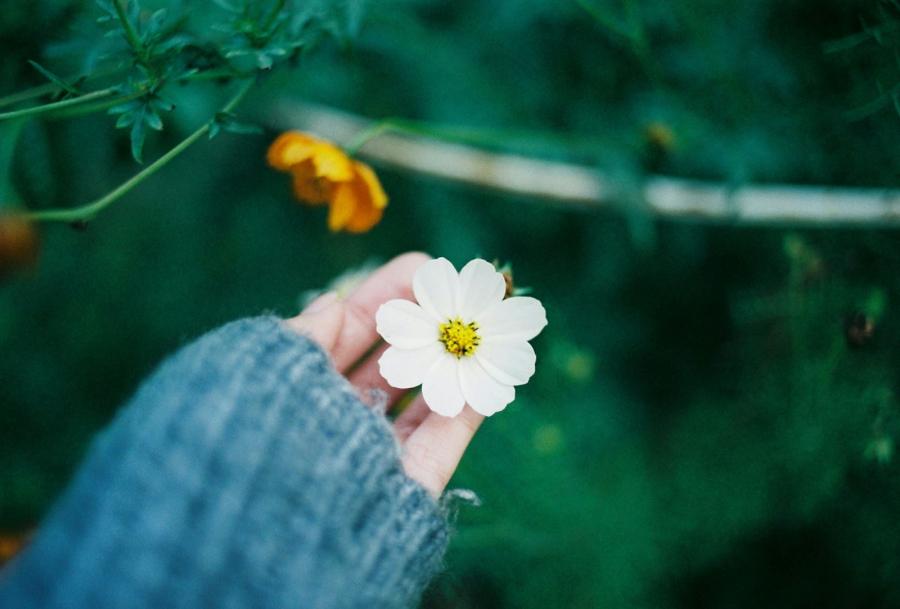 Muốn an nhiên hạnh phúc hãy biết vứt bỏ 4 thứ trên đời, không làm được bạn sẽ chỉ rước thêm tai họa - Ảnh 2