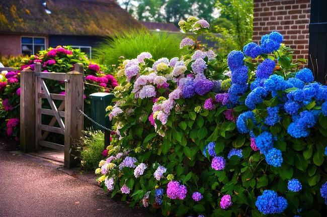 Hàng rào hoa, cổng gỗ đẹp như chốn thiên đường.
