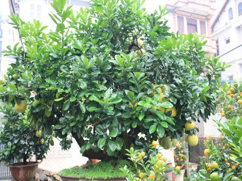 Những<a target='_blank' href='https://phunusuckhoe.vn/-loai-cay-trong-truoc-nha-de-hut-tien.topic'> loại cây trồng trước nhà để 'hút tiền'</a> về cho chủ nhân - ảnh 2