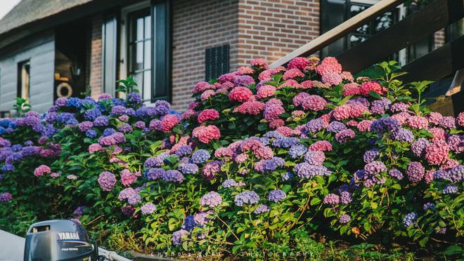 Hoa có mặt ở khắp nơi trong khu vườn của người dân.