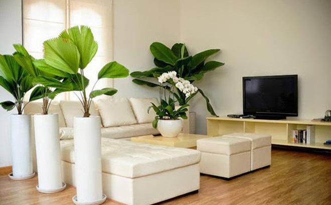 Để đôi môi không còn nứt nẻ vào mùa đông, chị em có thể làm cho không khí xung quanh bớt khô hơn bằng cách trồng thêm một ít cây xanh trong nhà