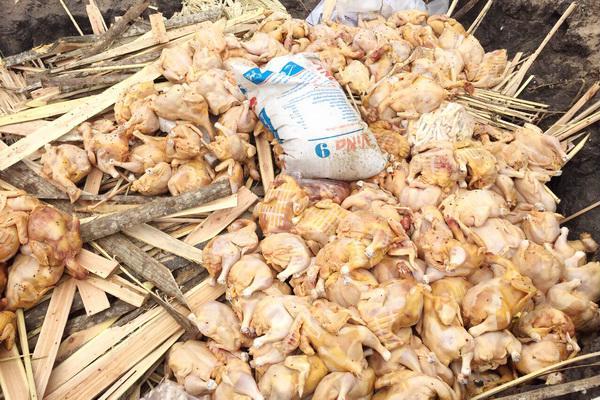 Bắt giữ gần 500 kg gà đã bốc mùi hôi thối - Ảnh 1