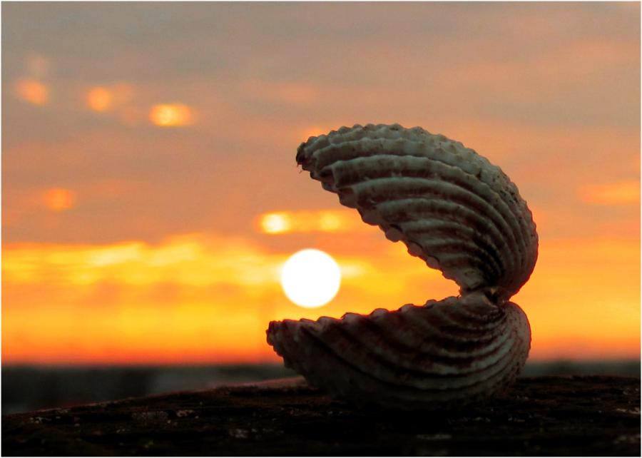 Thức dậy sớm và 10 điều tuyệt vời bạn đón nhận được từ ánh bình minh - Ảnh 2