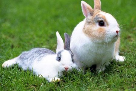 Thỏ khôn đào ba hang, người khôn tính 3 nước - Ảnh 1