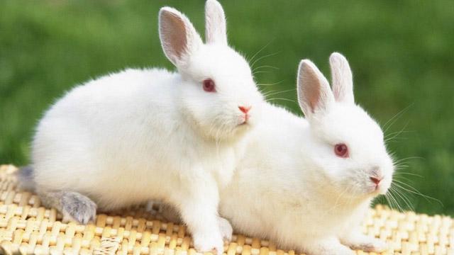 Thỏ khôn đào ba hang, người khôn tính 3 nước - Ảnh 2