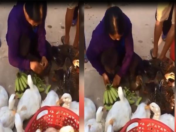 Người phụ nữ gây bức xúc vì liên tục nhét chuối vào vịt để tăng cân nặng - Ảnh 1