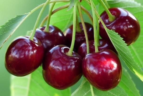 14 loại hoa quả bổ dưỡng giải nhiệt tốt nhất cho mẹ bầu trong thai kỳ - Ảnh 4