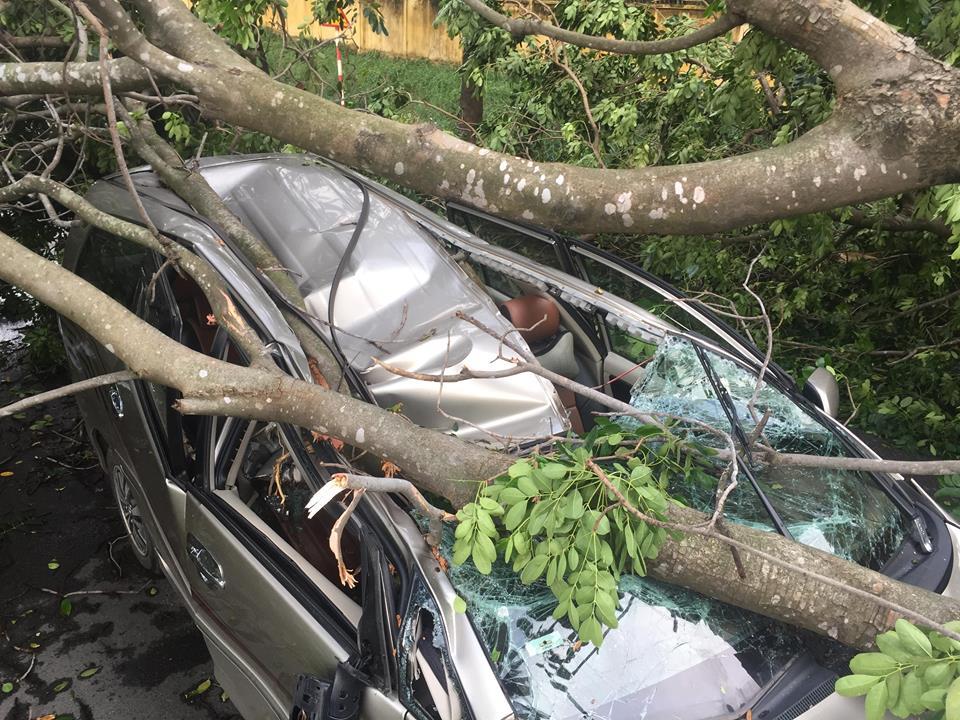 Cây xanh ngã đè bẹp ô tô, tài xế thoát chết trong gang tấc - Ảnh 1