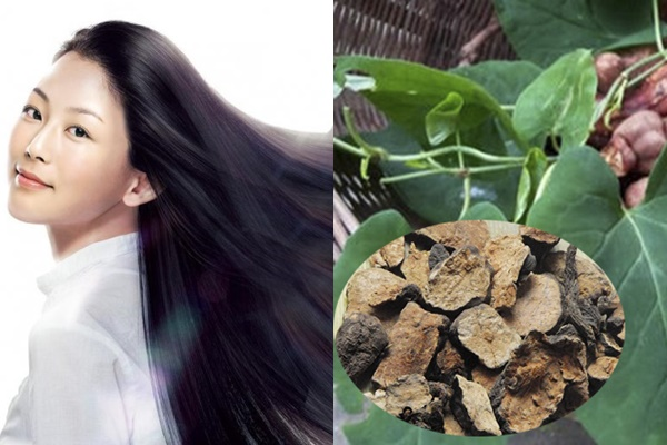 Chăm sóc tóc hiệu quả với hà thủ ô