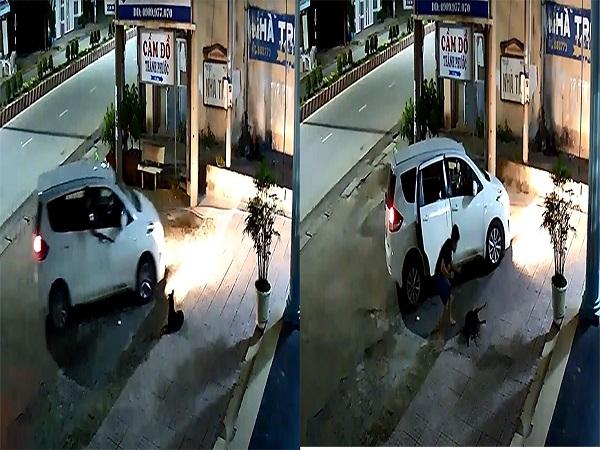 Người đàn ông đi ô tô, dùng súng điện trộm chó nhanh như cắt ở Sài Gòn - Ảnh 1