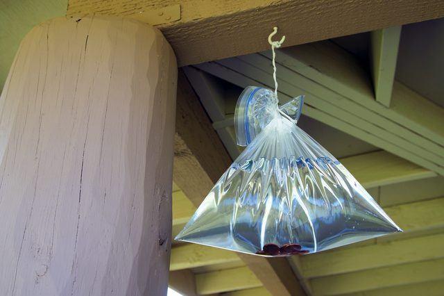 Lợi dụng hiện tượng khúc xạ ánh sáng, đuổi ruồi giấm không cần dùng thuốc