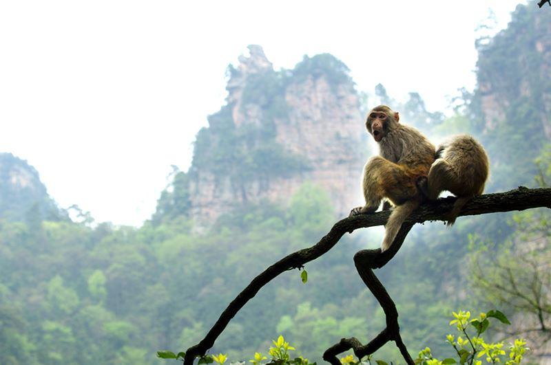 Cả đời đuổi bắt ảo mộng chẳng khác gì chúa khỉ mò trăng - Ảnh 1