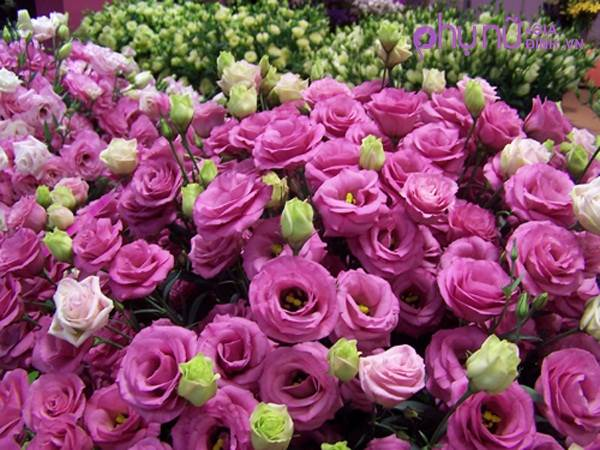 Muốn năm mới tiền 'chất cao như núi' thì nhớ những điều này khi cắm hoa ngày Tết - Ảnh 3