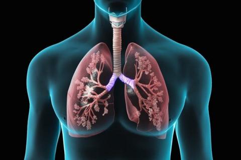 Bệnh lao phổi: Nguyên nhân, triệu chứng và phương pháp điều trị ai cũng nên biết - Ảnh 1