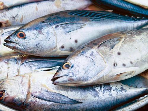 3 loại cá nhiễm kim loại nặng và chất gây ung thư cực kỳ nguy hiểm - Ảnh 3
