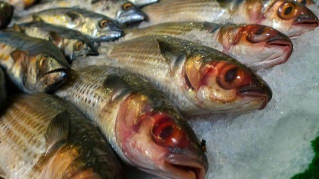 3 loại cá nhiễm kim loại nặng và chất gây ung thư cực kỳ nguy hiểm - Ảnh 4