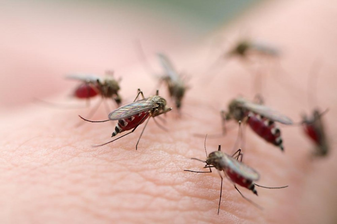 11 tháng, hơn 277 nghìn người mắc bệnh sốt xuất huyết chưa có thuốc đặc trị - Ảnh 1