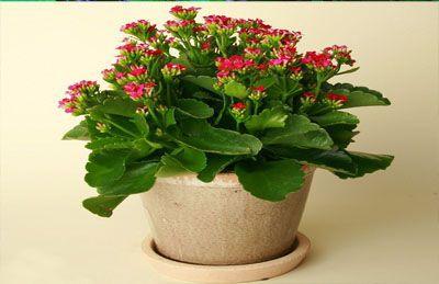 Những loại cây trồng trong nhà vừa lọc sạch không khí, vừa mang tài lộc cho chủ - Ảnh 2