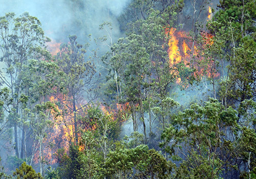 Hơn 100 người chữa đám cháy rừng ở Đà Nẵng - Ảnh 1