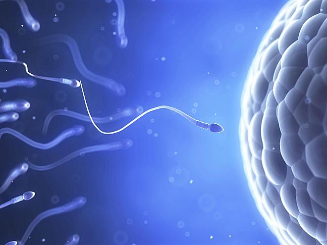 Giải mã cuộc đua của hơn 250 triệu tinh trùng để gặp trứng - Ảnh 1