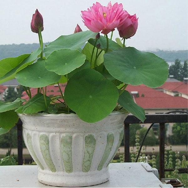 Trồng ngay 5 loại hoa 'hộ mệnh' vào tháng cuối năm để hóa giải vận xấu cho gia chủ - Ảnh 1