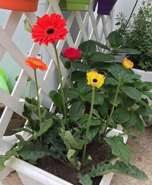 Trồng ngay 5 loại hoa 'hộ mệnh' vào tháng cuối năm để hóa giải vận xấu cho gia chủ - Ảnh 2