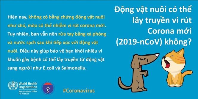 Chuyên gia y tế giải đáp thắc mắc 'thú cưng' chó, mèo lây truyền virus corona - Ảnh 1