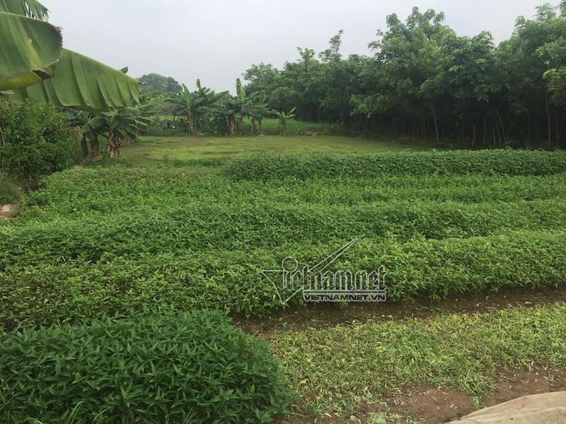 Sa lầy ở dự án 'ma', khách hàng trầy trật đòi hàng trăm tỷ mua đất - Ảnh 3